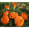 /Spray rose/Spray Orange/Spray Orange 2