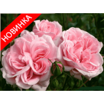 /Floribunda curb/Home and garden/Home and garden 1